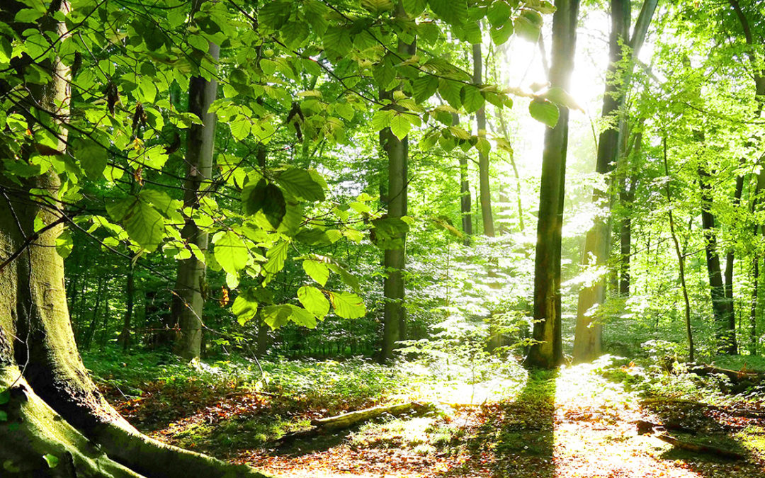 Le Festival des forêts a su s'adapter à la crise sanitaire